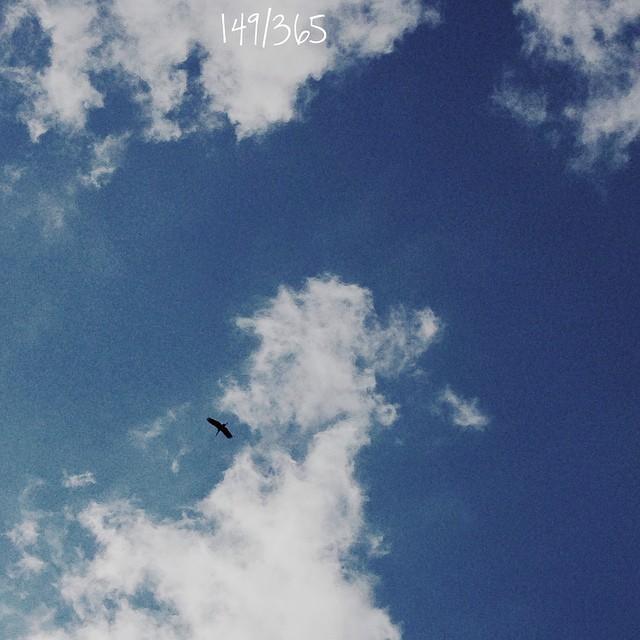 В путешествие нас провожал знакомый аист:) кружил над нами долго-долго, и все дети стояли задрав головы в небо:) #большоепутешествиевабхазию началось:) #365_до_30 #bird #sky #flight #blue #magicmoment
