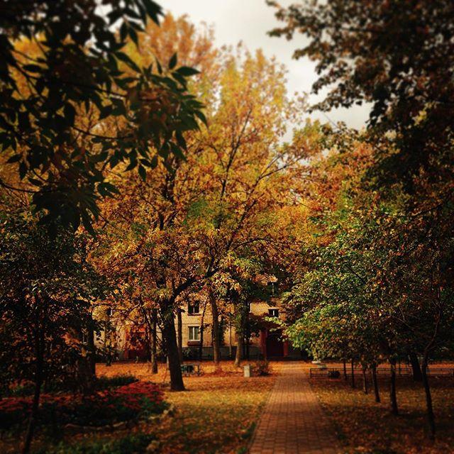 Осень ложится в моем сердце цветным ковром.