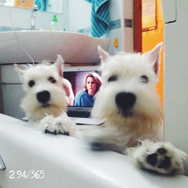 Принять ванну в одиночестве? Нет, не слышала:))) до_30  #цвергшнауцер #сынторика два раза:)))