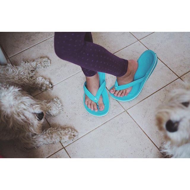 У Сони тяга к моей обуви:) не могу понять радоваться или нет:) ей комфортно в моем 42-ом, прямо вылезать не хочет:)  #дочкиматери     #сынторика #цвергшнауцер